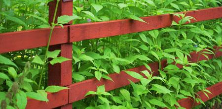 tuinhekken hout